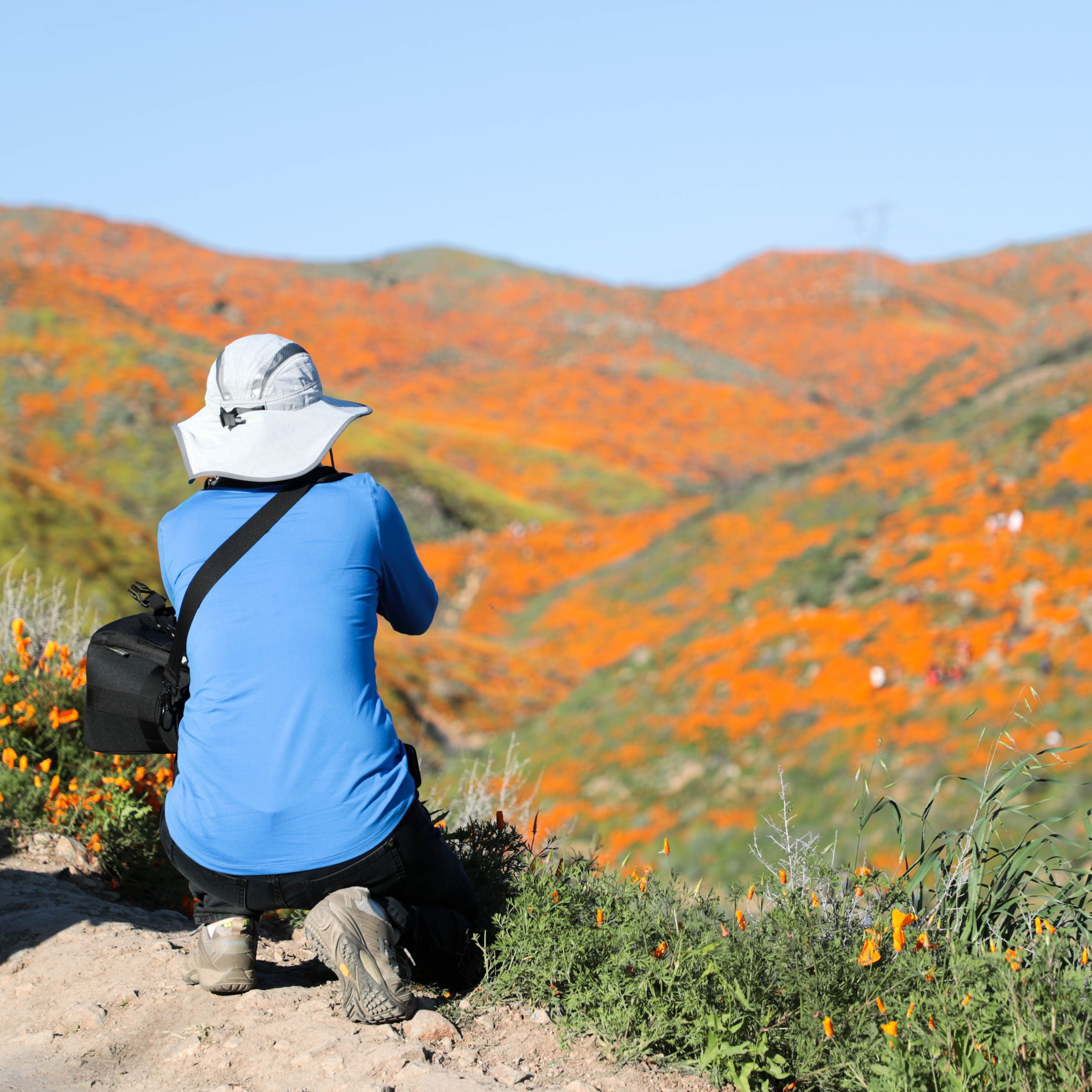 You're going to have to pay $10 to see Lake Elsinore's poppy super bloom this weekend