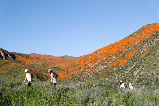 Crowds walk toward Walker Canyon in Lake Elsinore, Calif. to view the poppy fields on Saturday, March 16, 2019.