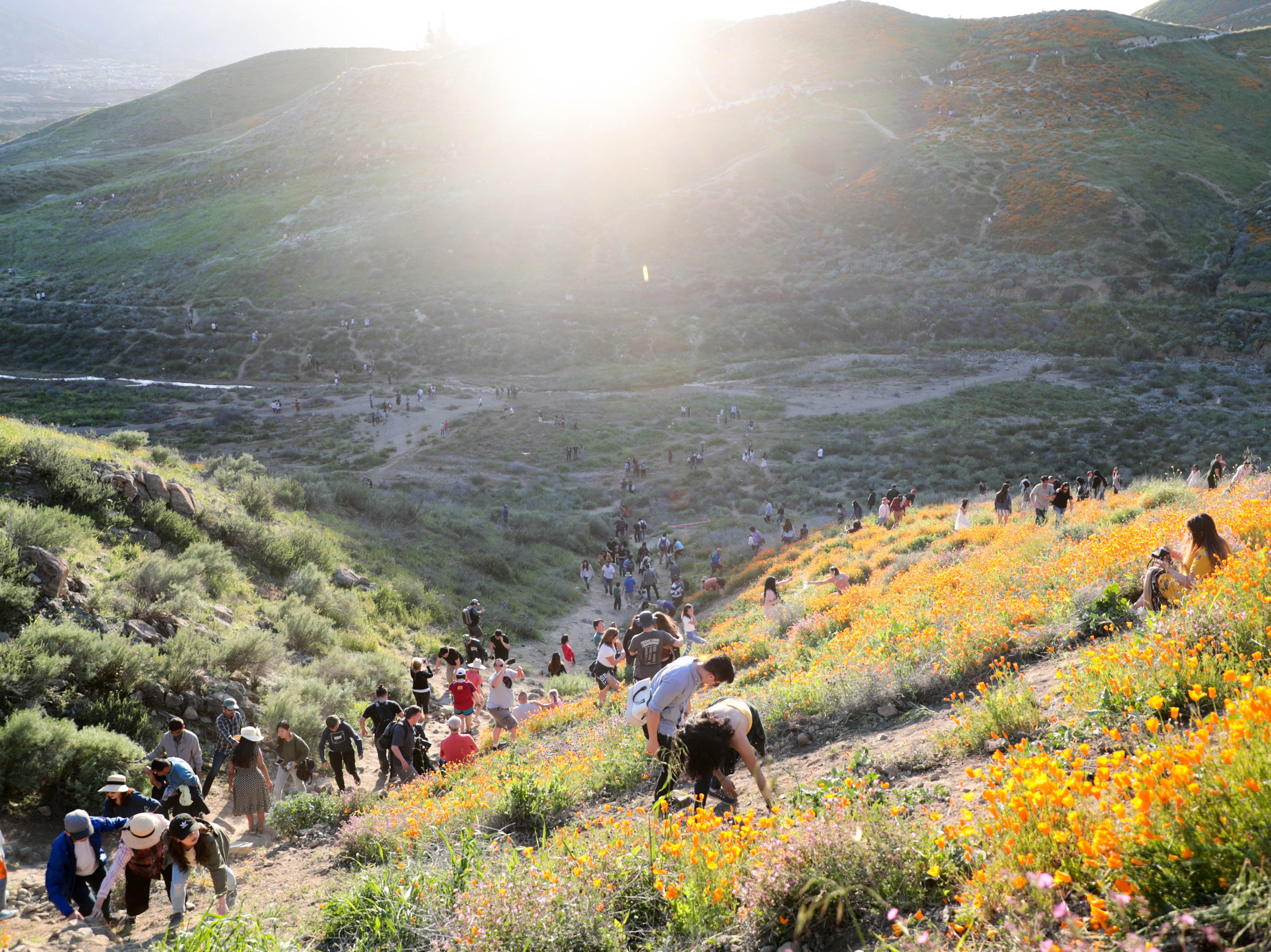 Crowds walk on Walker Canyon in Lake Elsinore, Calif. to view the poppy fields on Saturday, March 16, 2019.