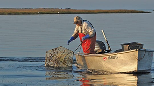 """Dwight Marshall, now retired, says his crabbing schedule is """"when I feel like it."""" Tylerton's oldest citizen, he has fished for crabs, oysters, terrapin and trout."""
