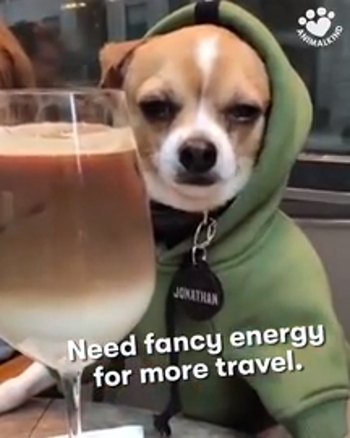 This jet-setting Chihuahua takes us on a journey through some of the most famous tourist attractions around France.