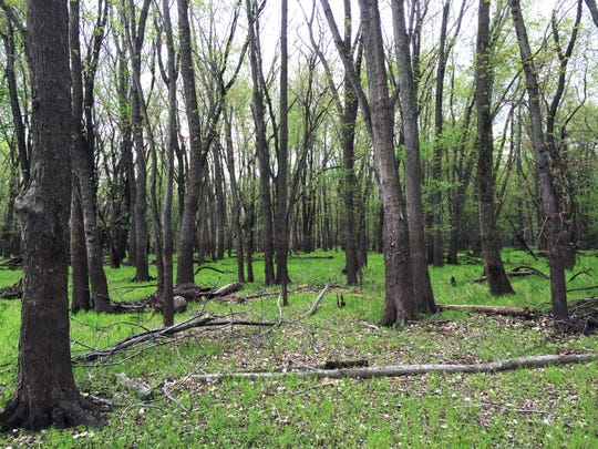 Pechman Forest is one portion of the delta area, where great blue heron, diverse species of fish and morel mushrooms can be found.