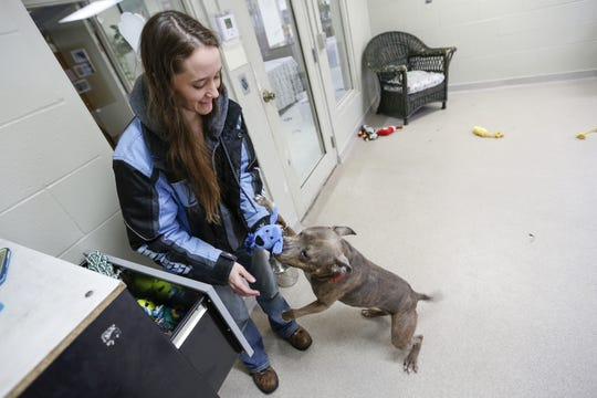 Nicole Smaxwell, lead dog handler at Lakeshore Humane Society, helps Helena pick out a toy for playtime Thursday, Feb. 17, 2019, in Manitowoc.