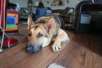 Justin, who has Asperger's syndrome, a sensory disorder and attention deficit hyperactivity disorder, was devastated at the disappearance of his four-legged companion.