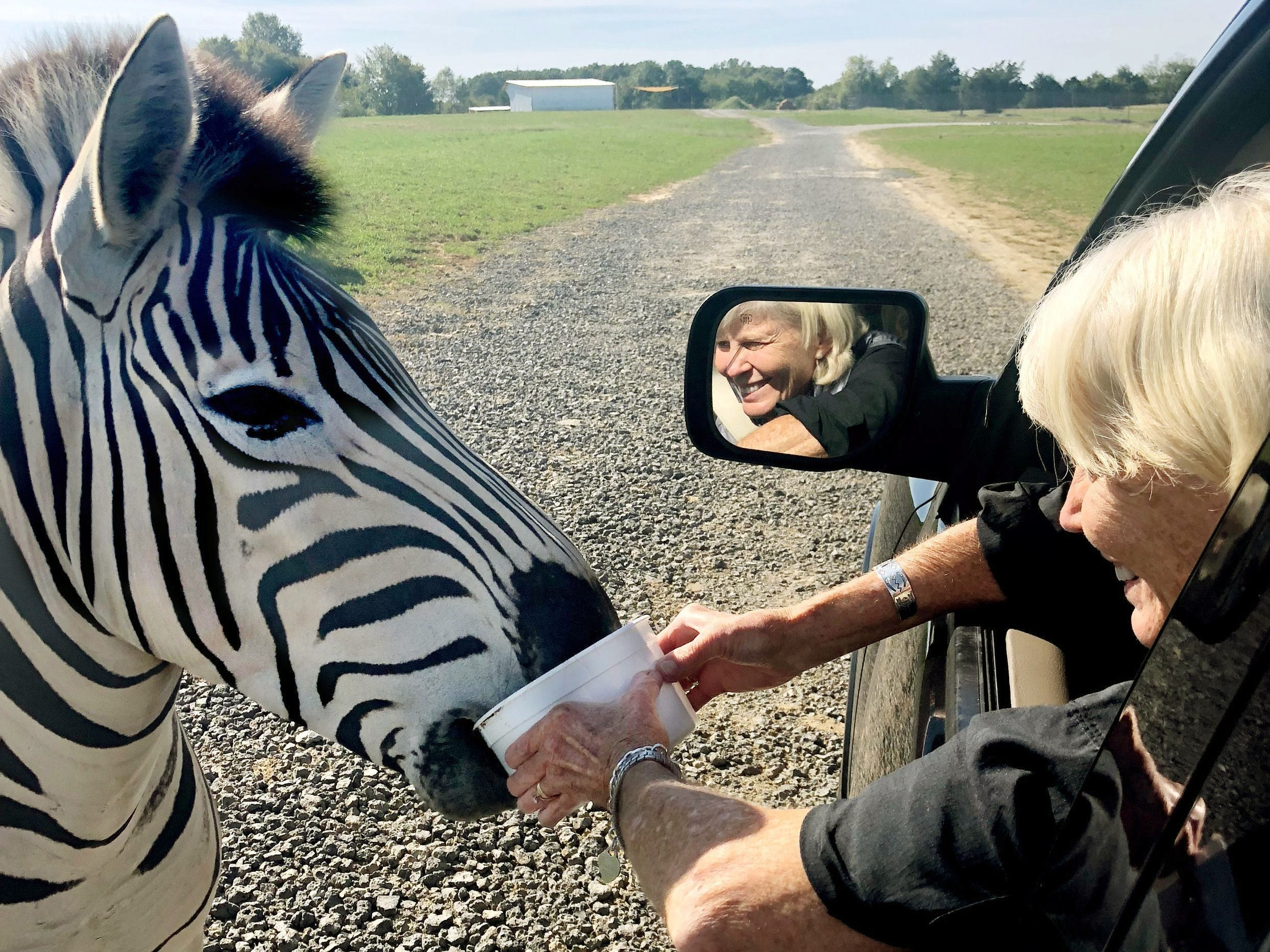 Mary Hance, aka Ms. Cheap, feeds a zebra some exotic pet food at the Tennessee Safari Park on Nov. 25, 2018.