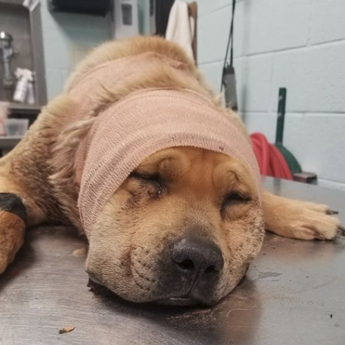 75-pound dog named 'Benson' found shot on the East Mesa