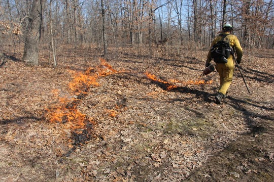 A Colorado State University student uses a drip torch to ignite leaves during a controlled burn at The Nature Conservancy's Bennett Spring Savanna Preserve.
