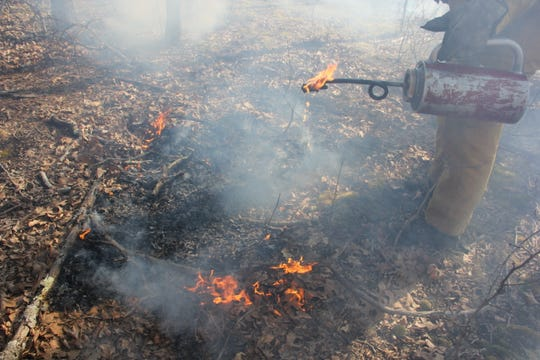 Fire teams use drip torches filled with a mix of gasoline and diesel fuel to ignite the forest floor.