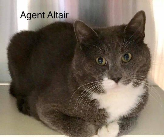 Agent Altair