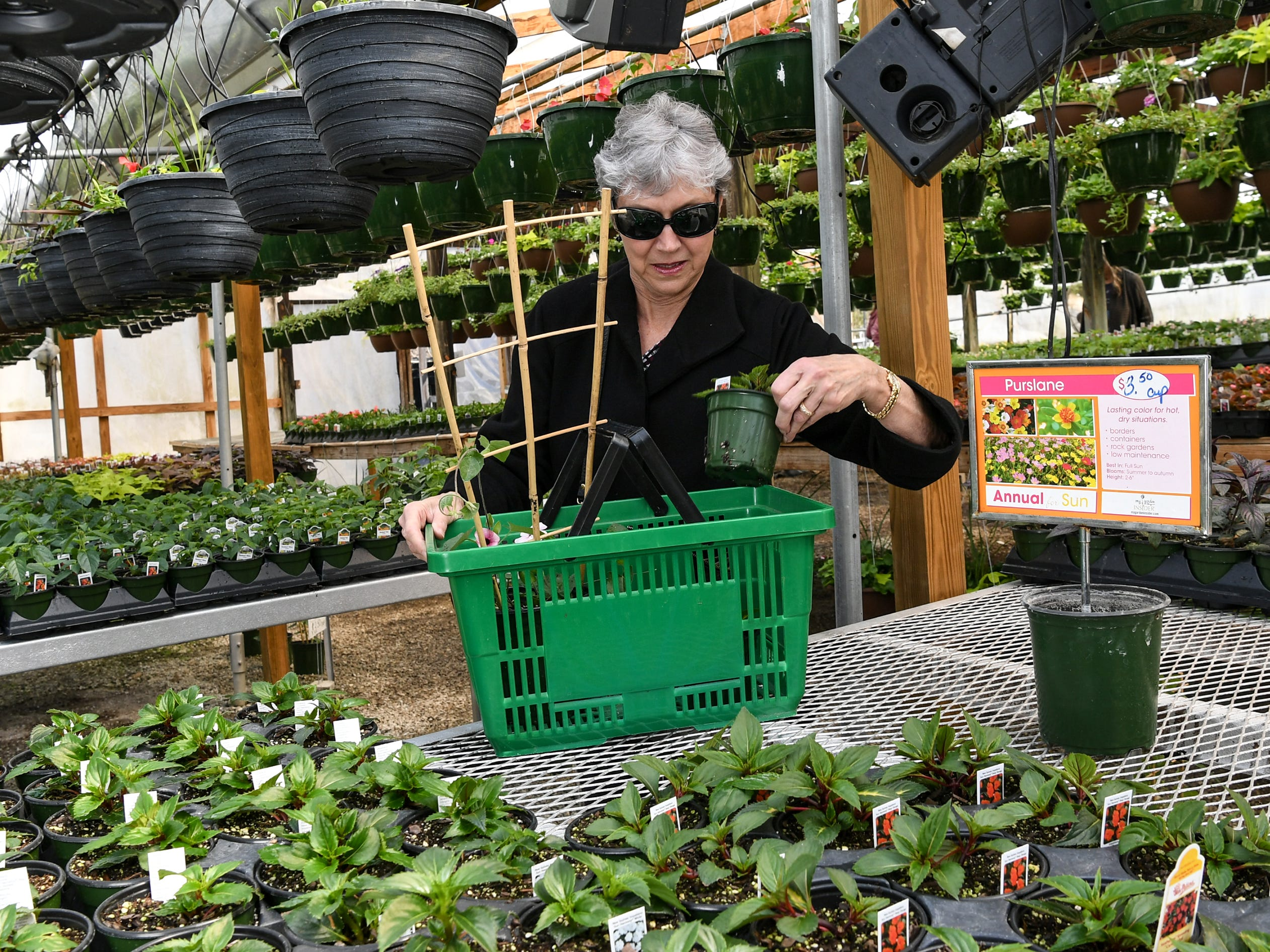 Julie Schattyn of Anderson picks up a few plants at McAlister Greenhouses in the Homeland Park community of Anderson during the first day of spring Wednesday.
