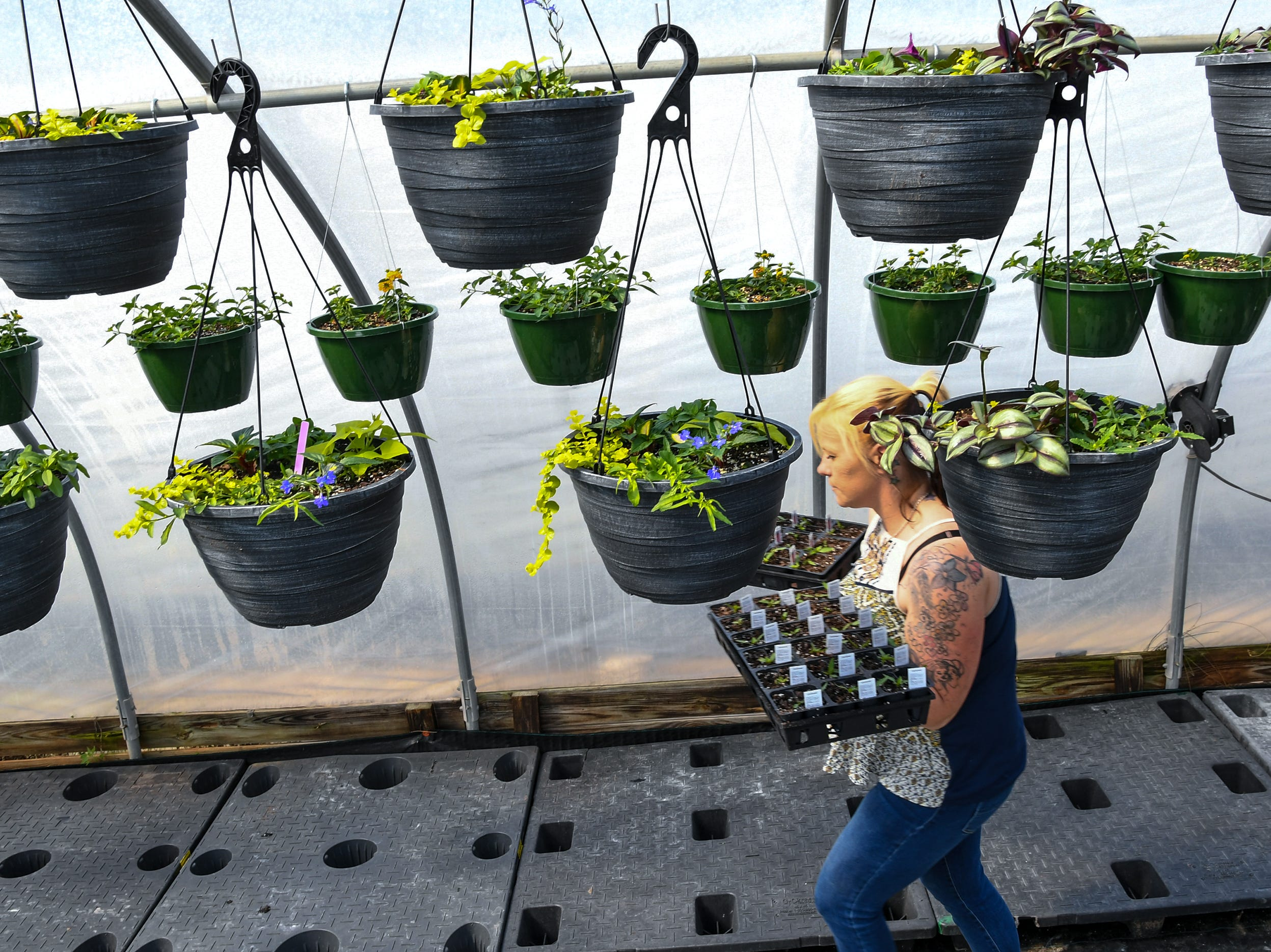 Crystal Pressley carries two flats of new plants to grow at McAlister Greenhouses during the first day of spring in Anderson Wednesday. The plant business in Homeland Park gets busy as the first day of spring is here with warmer weather.