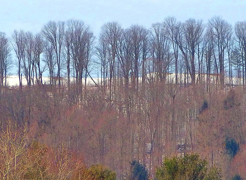 Trees in Whitney Point.