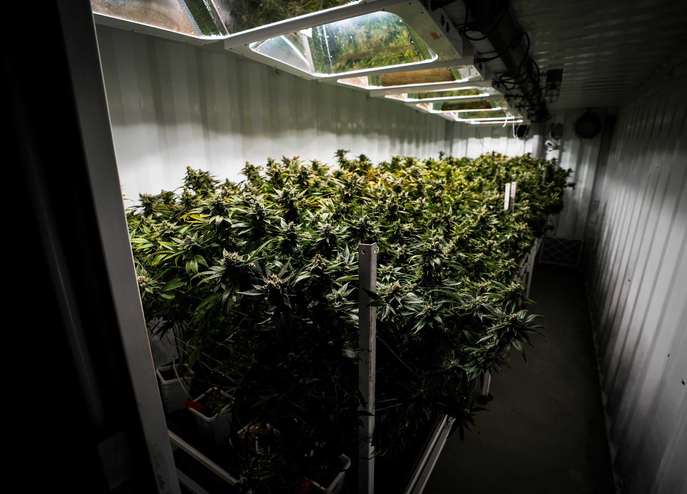 A look inside one of the fully-functioning grow pods at CVD, Inc. in Milton, Vt., on Tuesday, March 19, 2019. The hydroponic-equipped steel structures grow the facility's medical marijuana and house grow lights, irrigation and ventilation systems for quick growth.