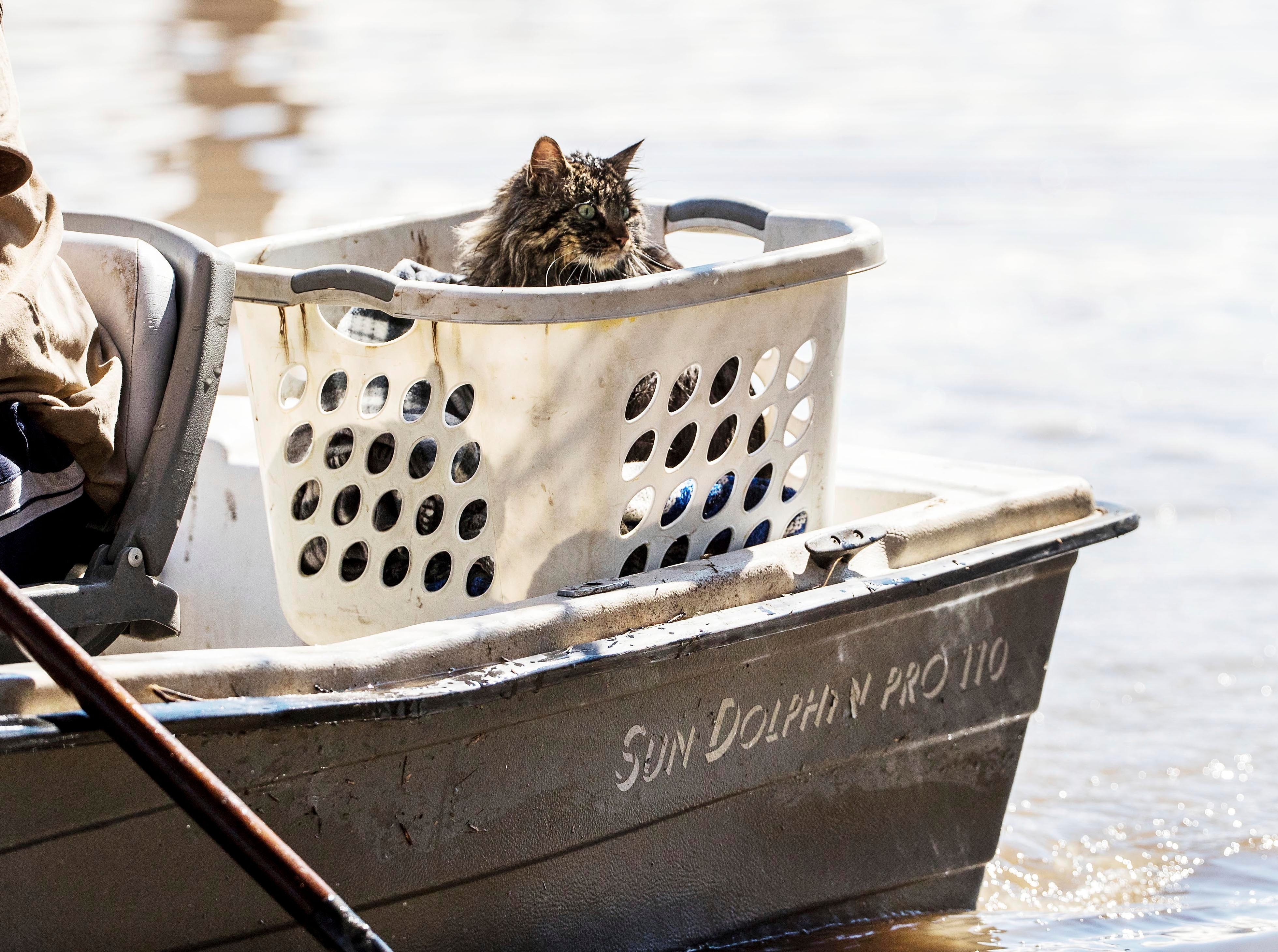 Bob the cat gets a boat ride after being rescued by Treyton Gubser and Daniel Gubser Wednesday, March 20, 2019, in Hamburg, Iowa. As some communities along the Missouri River start to shift their focus to flood recovery after a late-winter storm, residents in two Iowa cities are still in crisis mode because their treatment plants have shut down and they lack fresh water. (Chris Machian/Omaha World-Herald via AP)