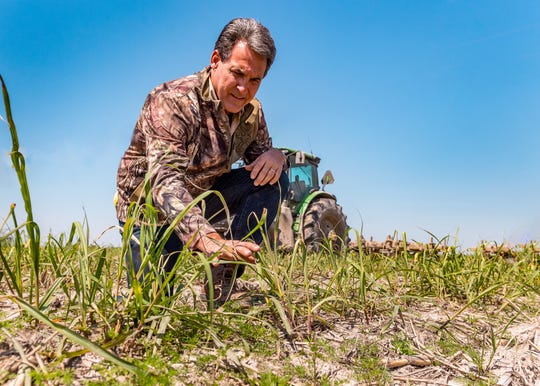 Chad Hanks has been a farmer for 29 years and has about 4,000 acres of sugarcane throughout Acadiana. While a difficult harvest last fall could affect this year's yield, many are hopeful the resilient crop will have a good year.
