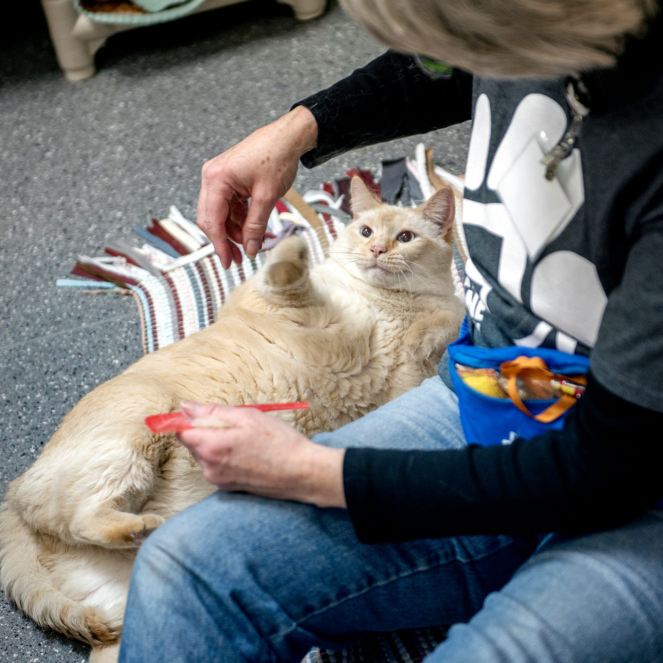 Sipping coffee and saving cats: Cat cafes headed for Lansing