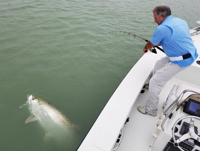 Greg Pitrone caught this 6 foot 110 pound tarpon at Marco Pass using a mullet.