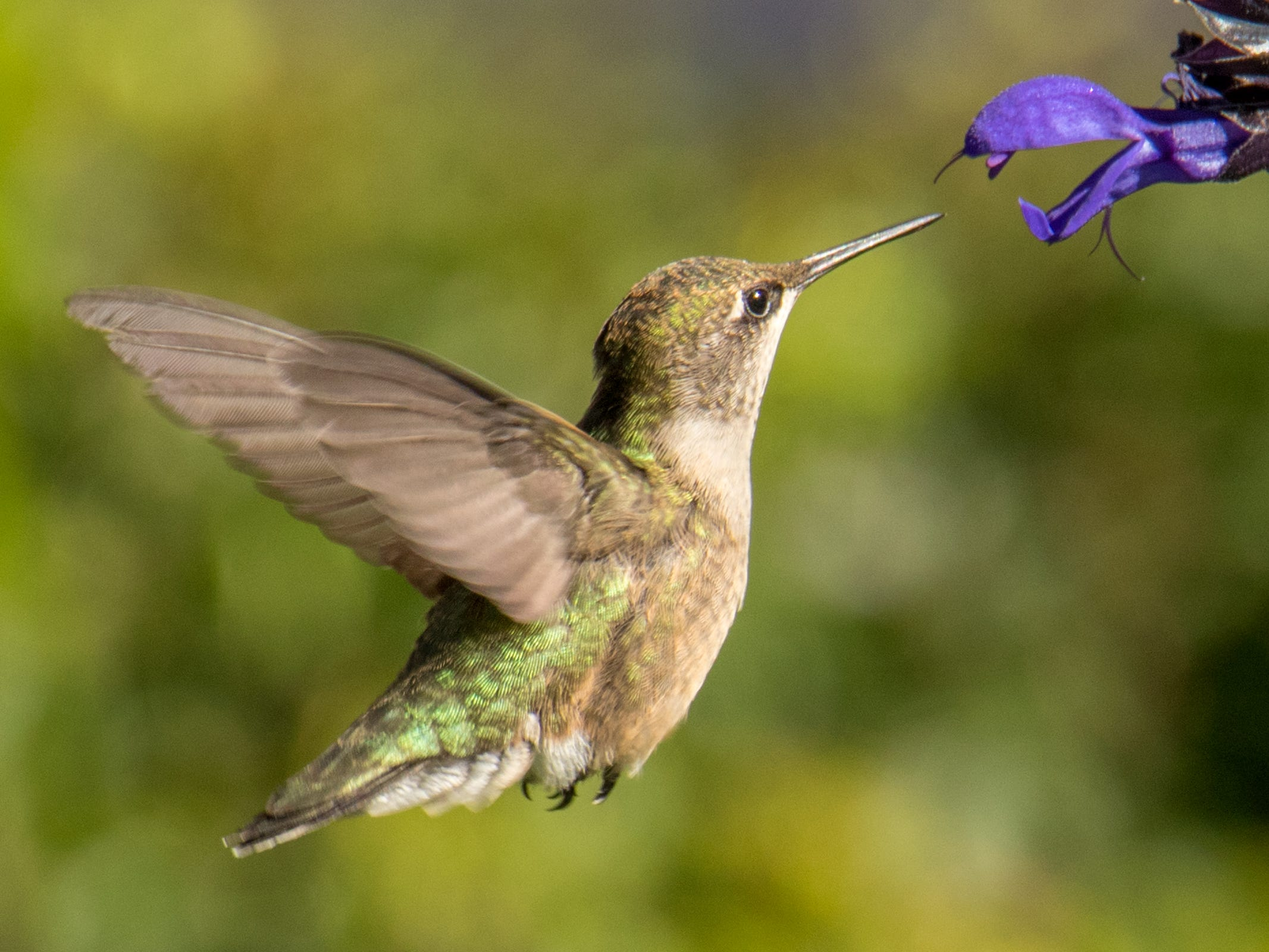 The thrill of having a tiny ruby-throated hummingbird buzz by never gets old.