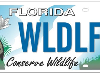"The Fish & Wildlife Foundation of Florida turned to the students of Ringling College of Art and Design to create the new ""Conserve Wildlife"" license plate. Now, the public has the chance to weigh in on the winning design at surveymonkey.com/r/bearplate."