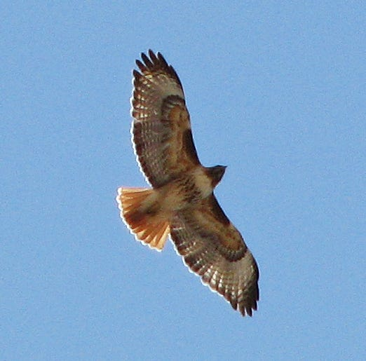 Migrating raptors cruise through the Borderlands