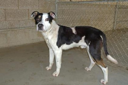 Bandit is a fun loving, friendly, outgoing boy who loves the outdoors, toys, kids and food.