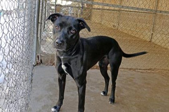 Trudy is a very playful, energetic girl.
