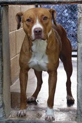 Kiya is a 2-year-old spayed female. She is kennel and leash trained.