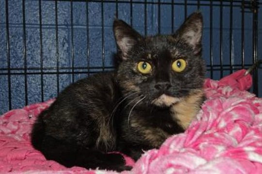 You can call me Jovi;. I'm a 7-month-old Tortoiseshell.