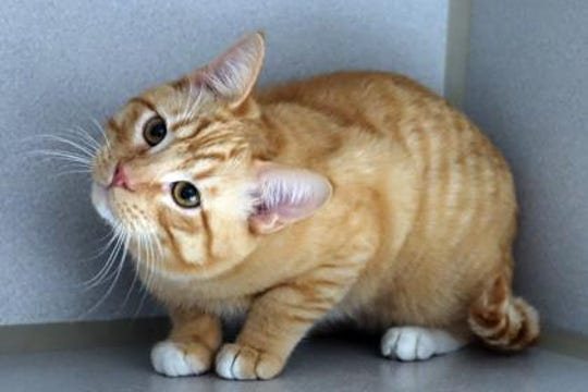 Garfield is a fun loving, friendly, affectionate kitty.