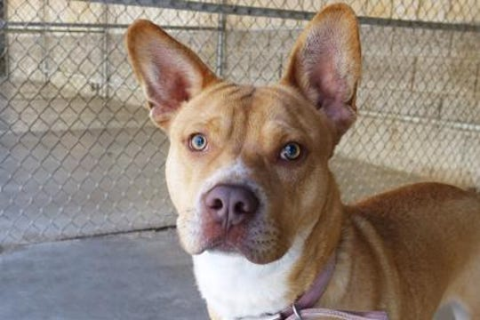 Rico! is fun loving, playful and energetic,, kennel trained and extremely friendly with people.