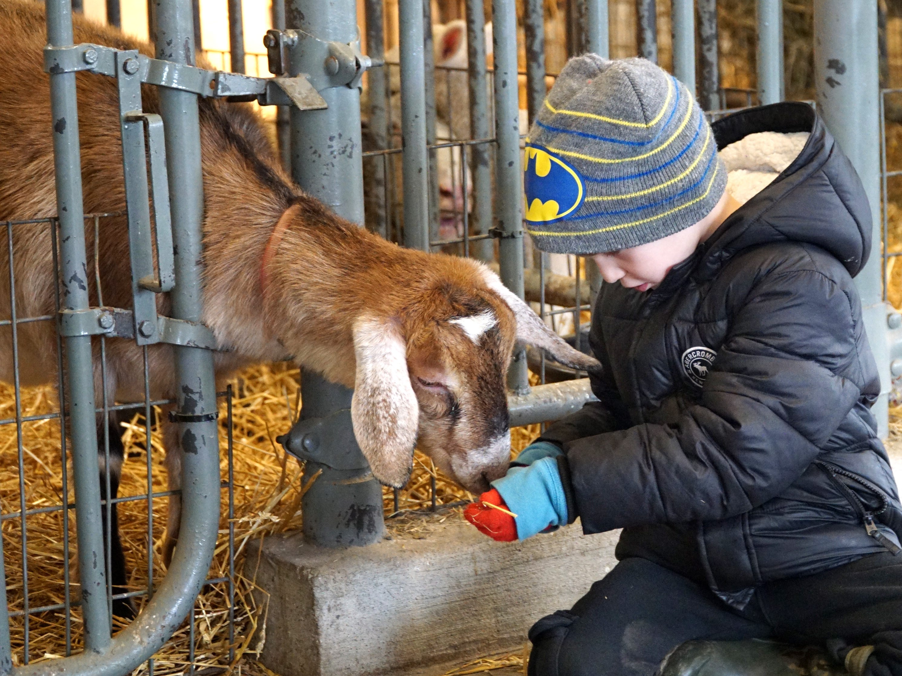 Dominic Corradi, 5, enjoys a moment with a goat at Kensington Farm Center's barn on March 20. Corradi was at the center with his sister Hadley and grandmother Colleen Whitman.