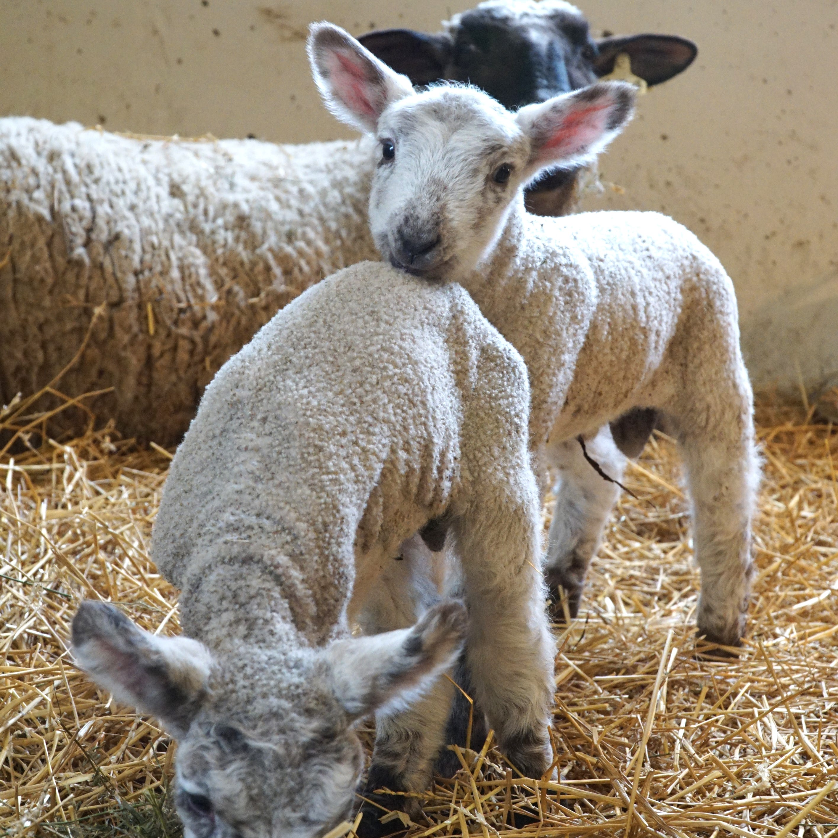 These newest additions at the Kensington Farm Center will brighten your day