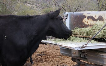 Arizona rancher, Chuck Backus, finds a new way to increase his beef production after he buys one of the roughest ranches in the state.