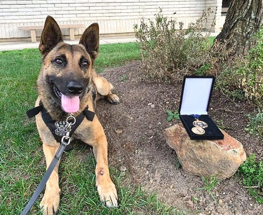 K-9 Chance of the Anderson Police Department poses with his Medal of Valor award.