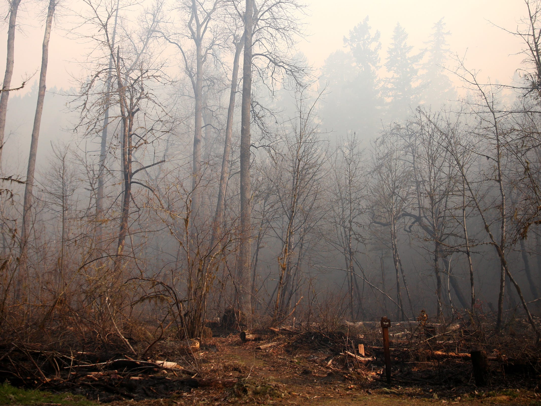 A wildfire in the North Santiam State Recreation Area near Lyons on March 20 burned 189 acres and forced the closure of the park.