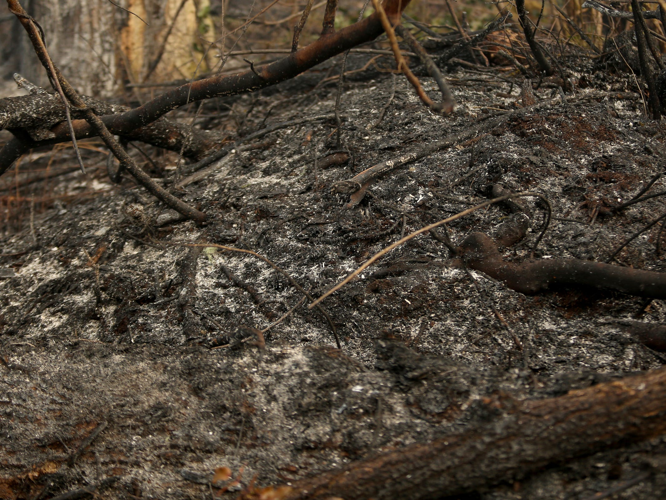 Ash covers the ground as a wildfire that began Tuesday continues to burn in the North Santiam State Recreation Area in near Lyons on March 20, 2019. The fire has forced evacuations in Marion and Linn counties.