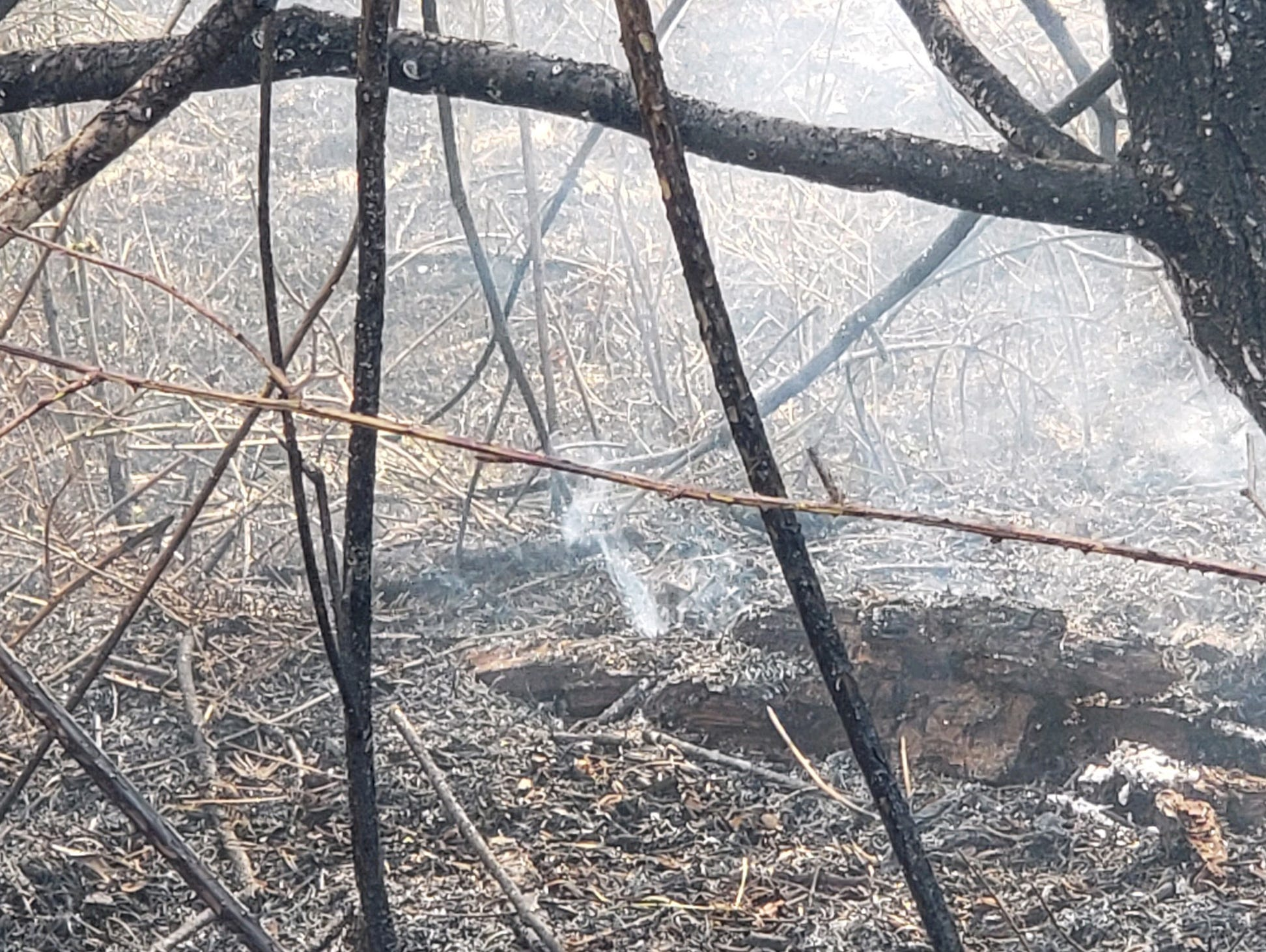 A burned area east of Lyons after a grass fire that was reported Tuesday afternoon near North Santiam State Park between Mehama and Mill City on the Marion County side of the North Santiam River.