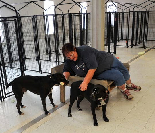Denise Gough, owner of Denise's Puppy Luvin' Resort, plays with her two rescues, PJ and Jasper at her dog resort located on Ditto Lane in Wichita Falls.