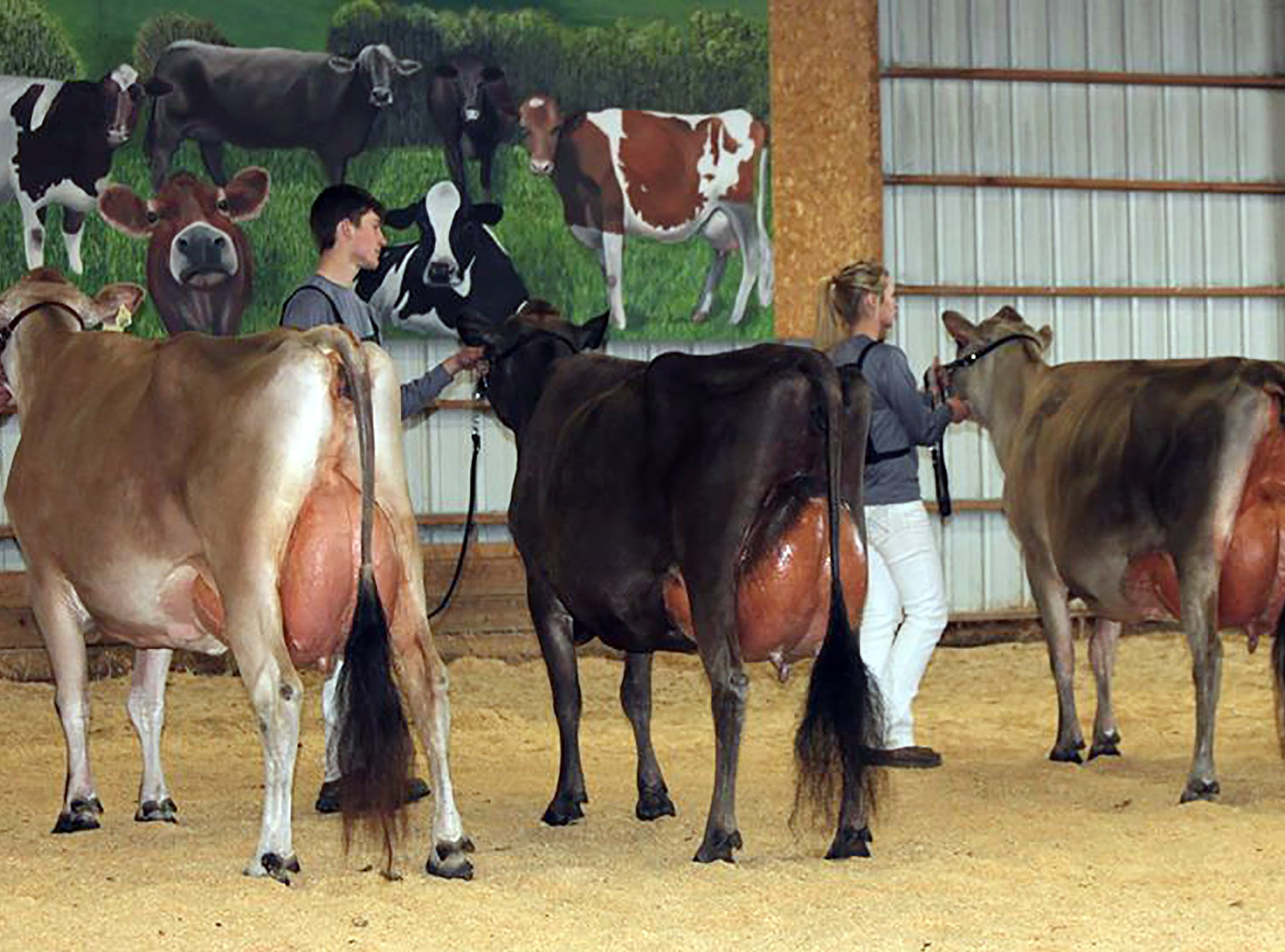 Entries are open for Wisconsin Jersey Spring Spectacular Show