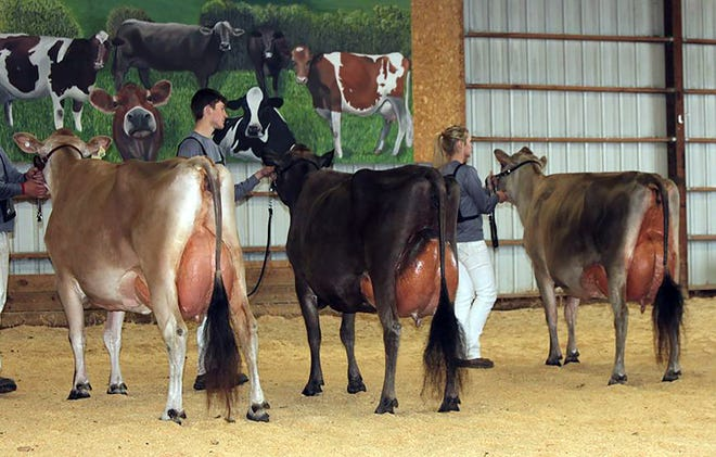 The Wisconsin Jersey Breeders Association Spring Spectacular Show will be held May 3 - 4 in Viroqua.