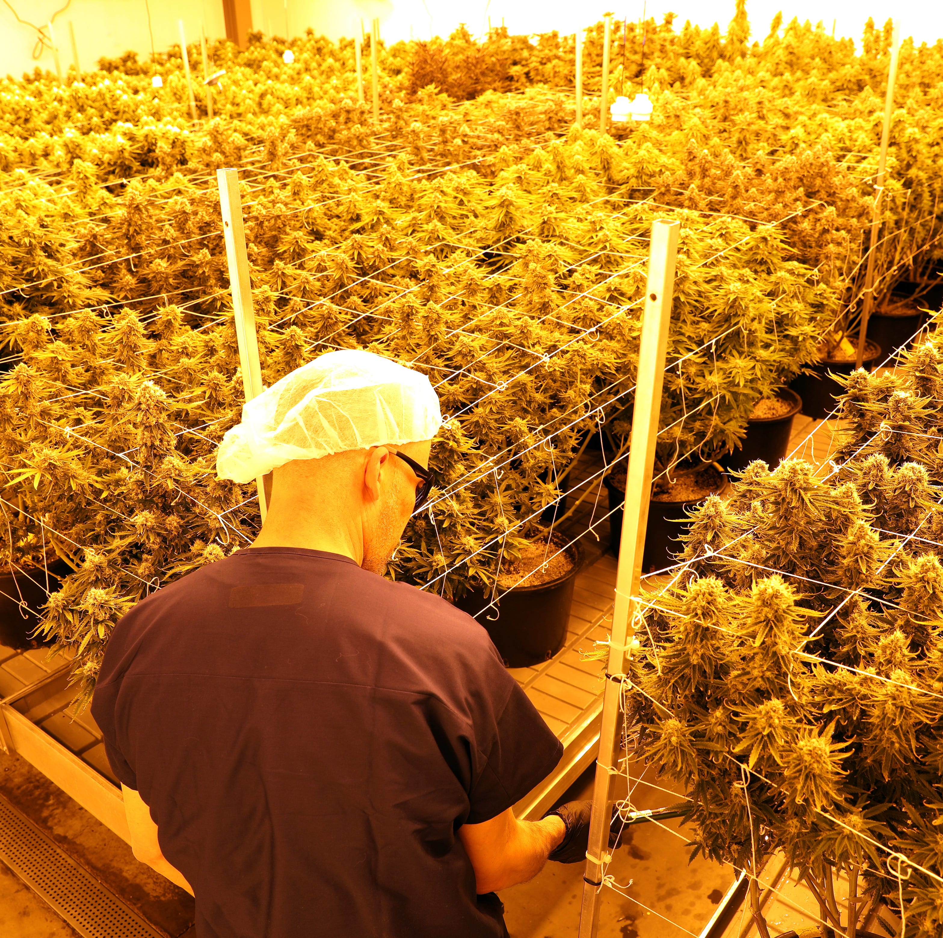 Grow Ohio products about to hit the market
