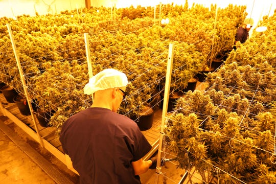 A pair of workers water plants in the yellow glow of metal halide bulbs in a nursery room at Grow Ohio in East Fultonham. The medical marijuana growing facility is expecting to bring its first products to market next month.