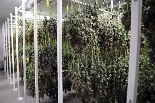 Marijuana plants dry in Grow Ohio's East Fultonham facility.