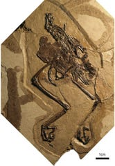 The new specimen was discovered in 110-million-year-old deposits in northwestern China.