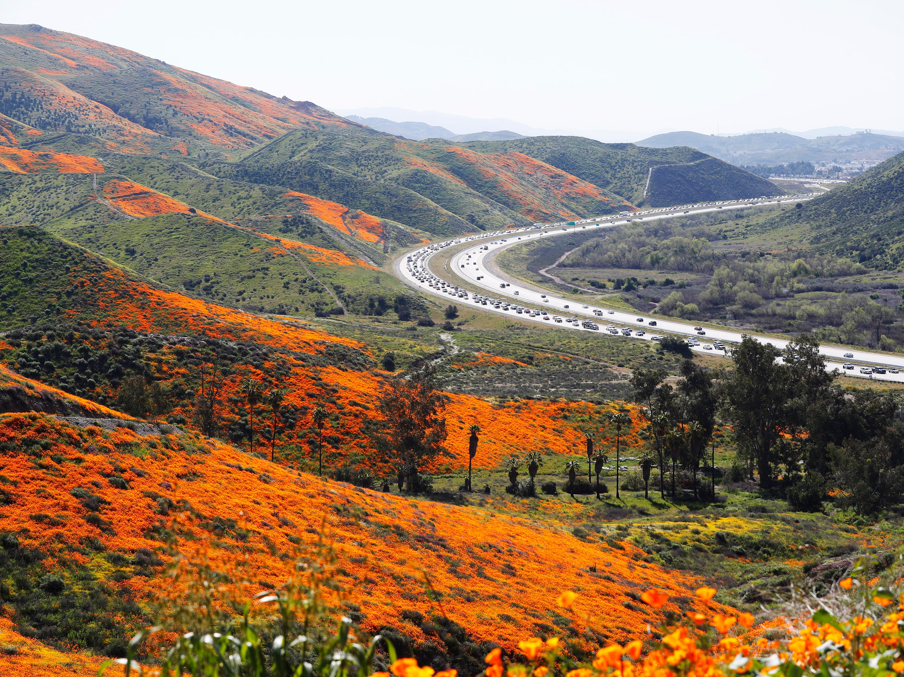 Cars are backed up on I-15 at Walker Canyon in Lake Elsinore, Calif. Sunday March 17, 2019. After massive crowds packed the small community to see the poppies, city officials have shut down Walker Canyon to the public. No shuttles or visitors will be allowed.