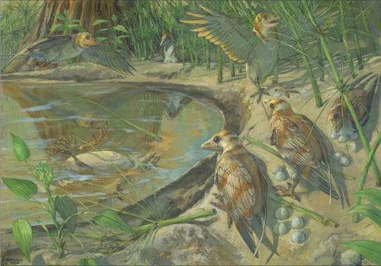 Artist's conception: The female bird dead in the water on the left (with an unlaid egg not visible inside its abdomen), is the newly discovered species.