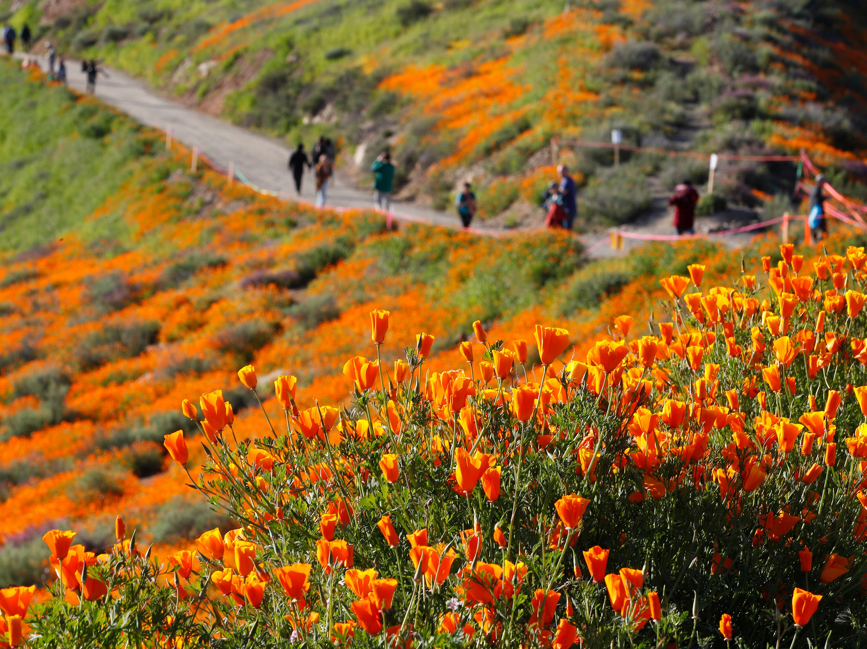 Visitors hike a path to see the poppies at Walker Canyon in Lake Elsinore, Calif. Sunday March 17, 2019. After massive crowds flooded the small community to see the flowers, city officials have shut down Walker Canyon to the public. No shuttles or visitors will be allowed.