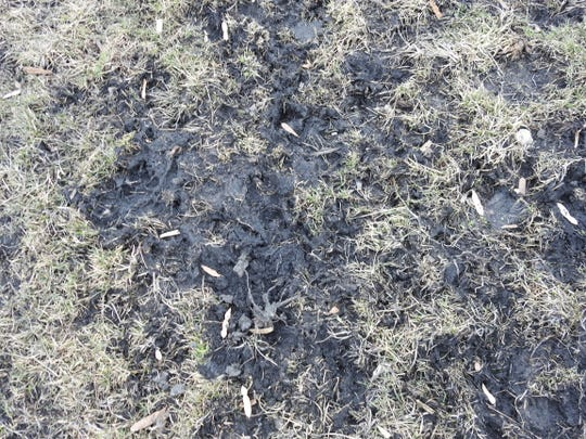 A close up of Wayne Rollyson's property outside of Newcomerstown. The slick black material has been identified as coal ash or black carbon in testing. Rollyson wants it gone and doesn't feel it should fall to him to clean up.