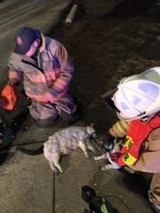 Ankeny firefighters administer oxygen to cats using pet oxygen masks outside an apartment fire on Thursday, March 21, 2019, in Ankeny.