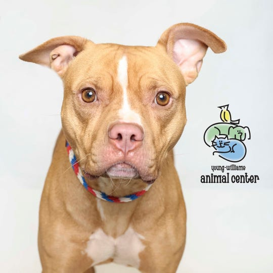 Ginger is up for adoption at Young-Williams Animal Center on Thursday, March 21, 2019.